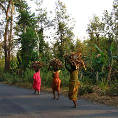Conservation versus development: For India's forest communities, nature is an insurance