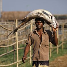Species-specific advisories are helping fishermen in India find good catch, save time