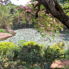 In Bengaluru, once India's 'garden city', parks are now restricted areas that keep the poor out