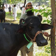 Pakistan: Eight buffaloes belonging to ex-PM Nawaz Sharif sold for 2.3 million rupees