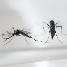 Centre sends health experts to Madhya Pradesh to verify reports of Zika infection