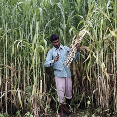 UP: Sugarcane farmers in Bijnor threaten to immolate themselves after dues remain unpaid