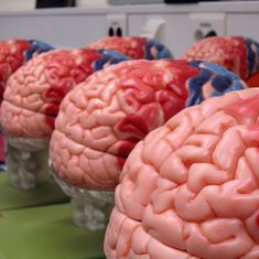 Scientists have created mini-brains that could one day outsmart us